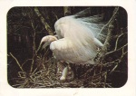 weet-bix white egret