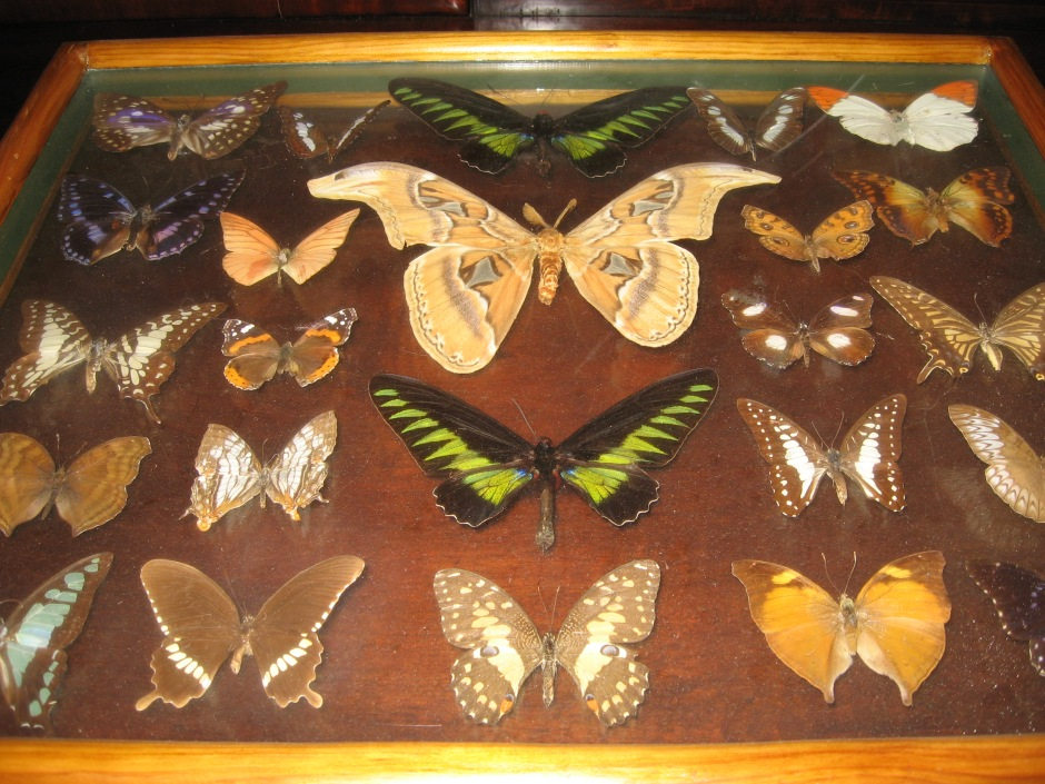 mounted board with butterflies, Maryann Adair, Is It Art?