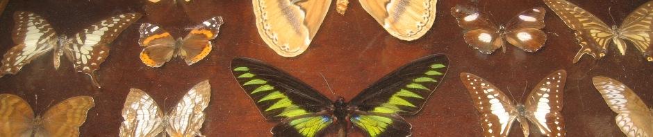 mounted board with butterflies, Maryann Adair, Is It Art?