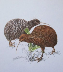 bruce harvey kiwi