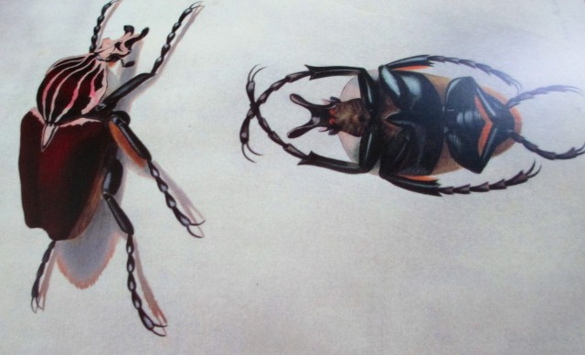 xmas-beetle