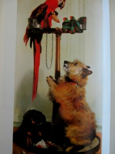 edwin-landseer-islay-and-tilca-with-red-macaw-and-2-lovebirds