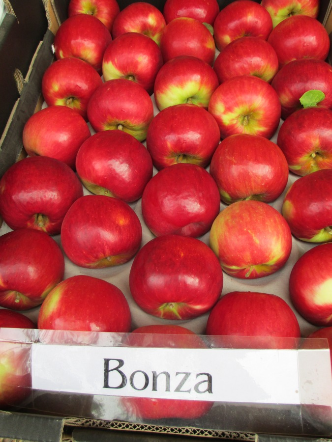 Bonza Apples grown in Harcourt, Victoria