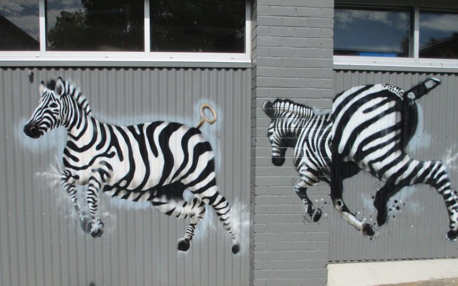 Makatron | Zebras